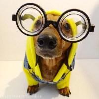 Minions Dog Costumes | POPSUGAR Pets