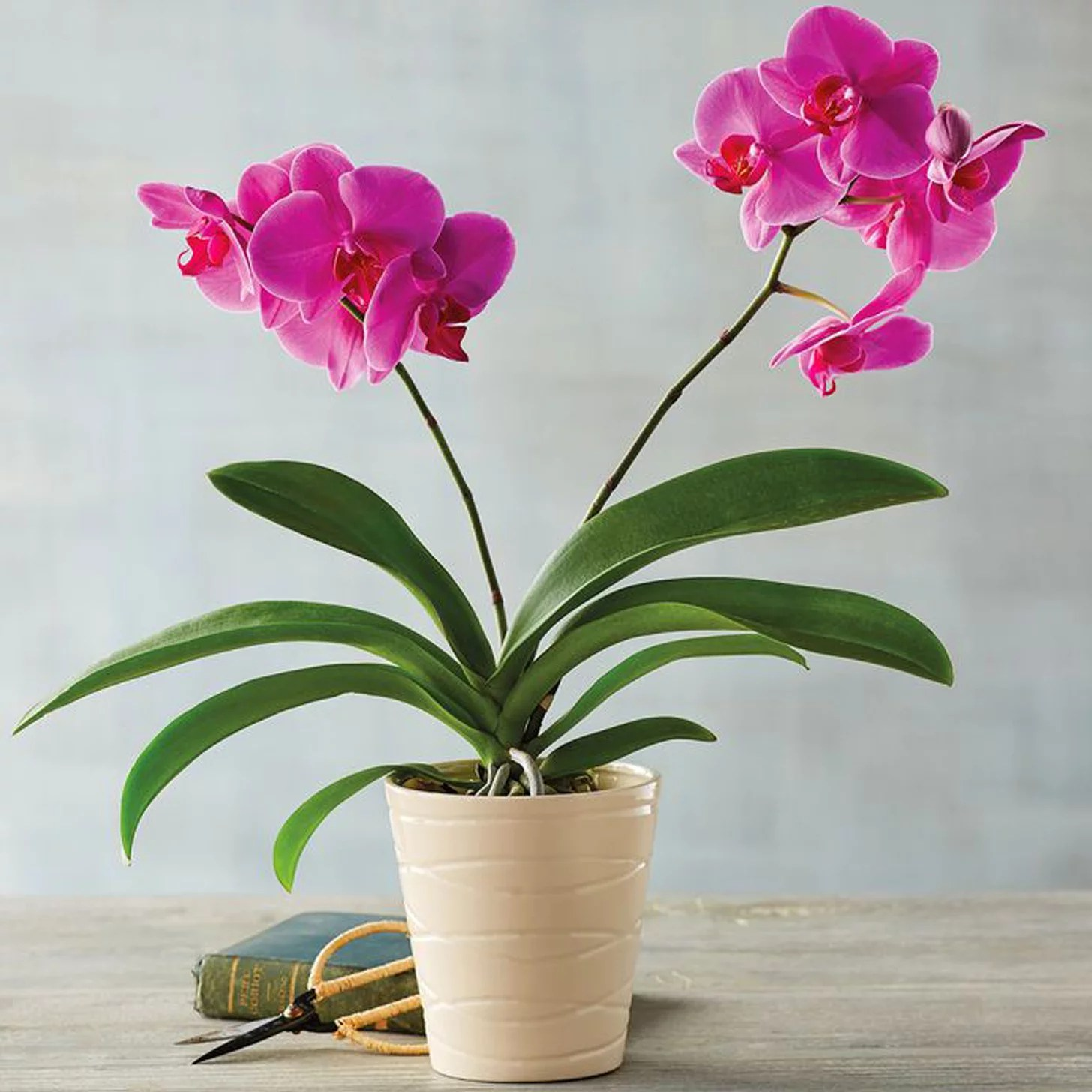 Best Indoor Flower Plants For Beginners Popsugar Home