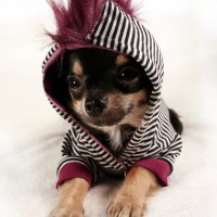 Until Vivienne Westwood starts a pet clothing line, your ...