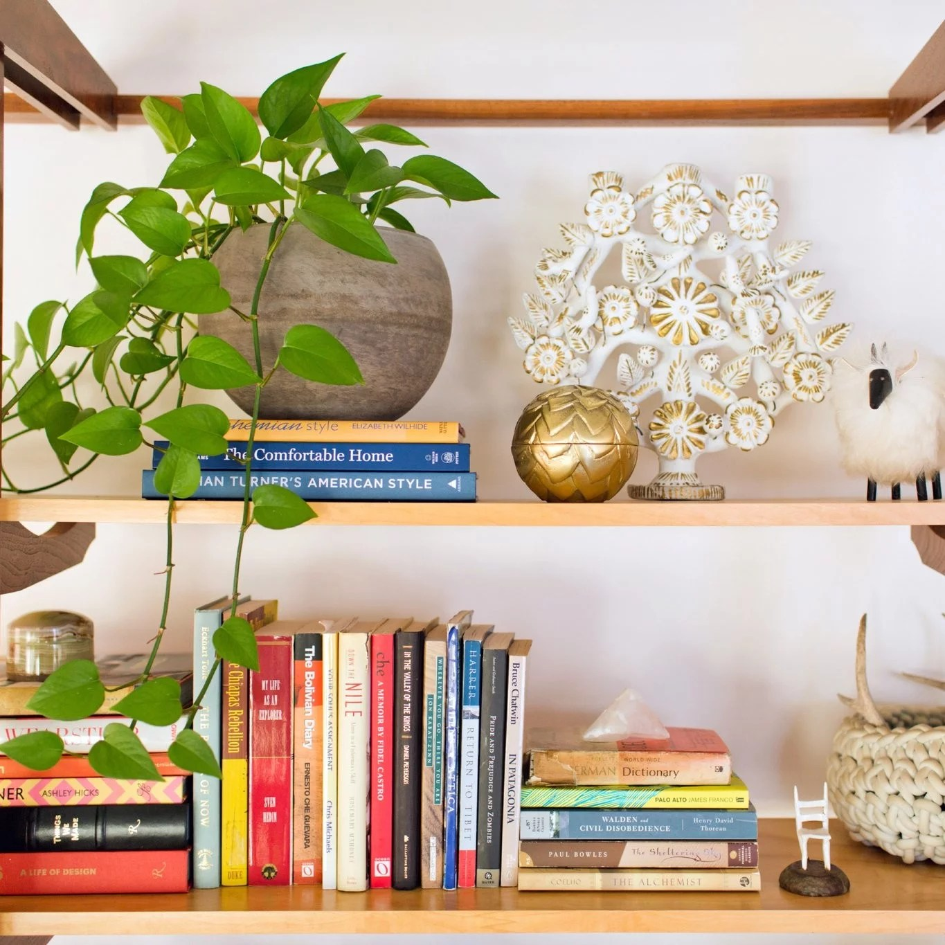 Indoor Plants For Low Light Best Houseplants For Low Light Popsugar Home Australia