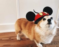 Dogs Wearing Mickey Mouse Costume