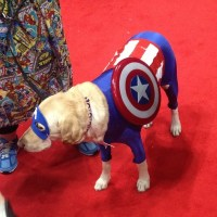 Captain America | Creative Dog Costumes | POPSUGAR Tech ...