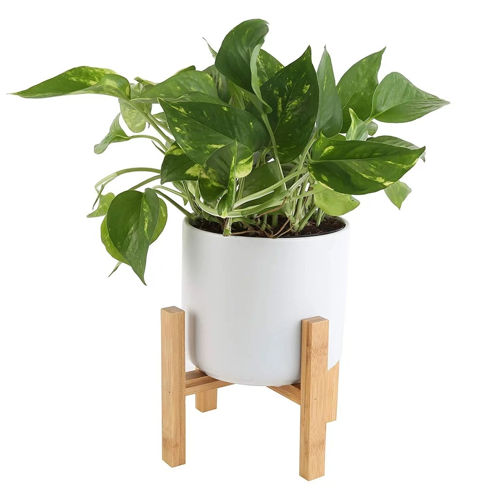 Indoor Plants Indoor Plants For Air Quality On Amazon Popsugar Home