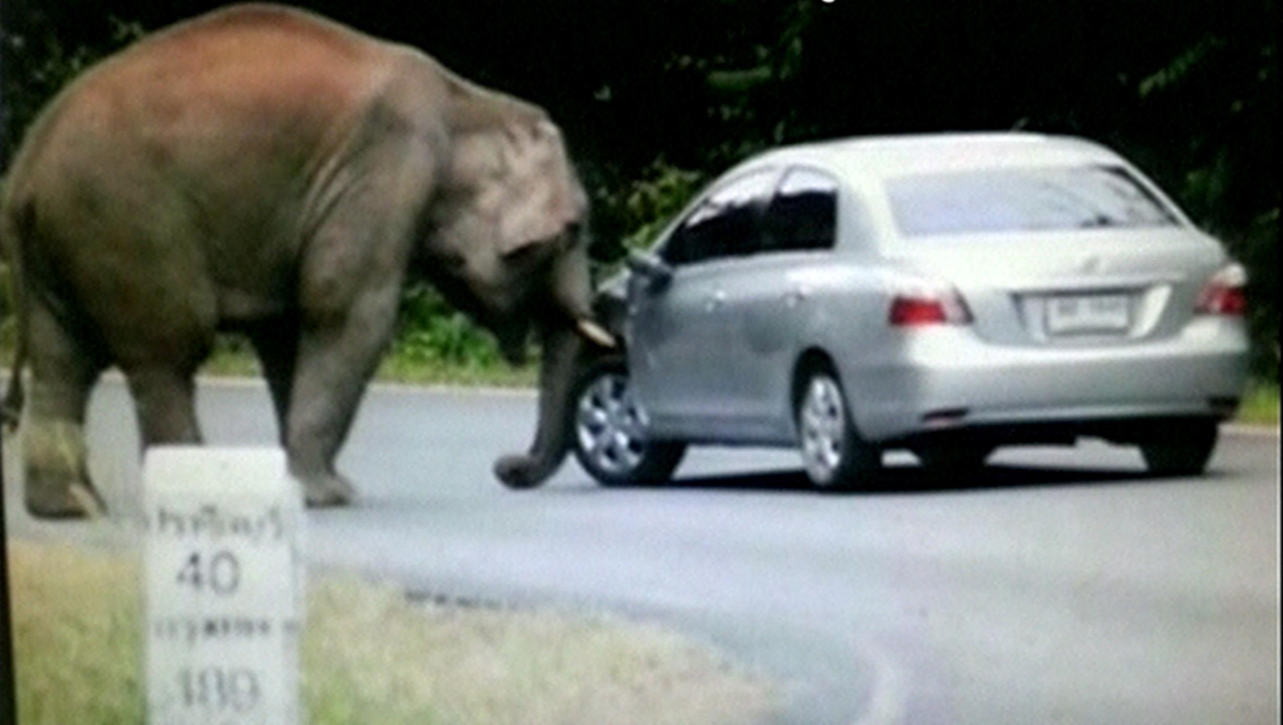 Animal Crush Watch An Elephant Crush A Car In Thailand