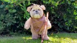 Small Of Star Wars Dog
