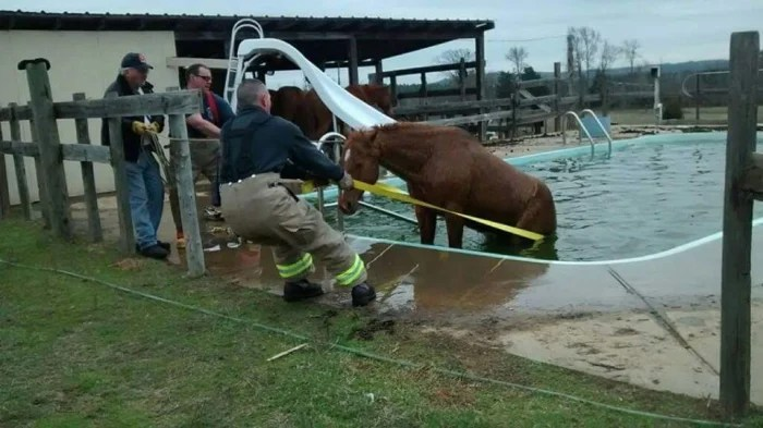 Texas firefighters rescued a horse that got trapped in a pool