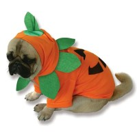 Cutest Halloween dog costumes inspired by food