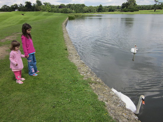 Swan family at Leeds Castle