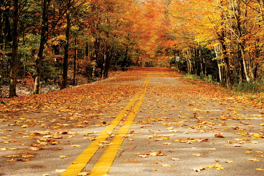 Pumpkins Fall Wallpaper Scenic Route Hit The Road For Fall Foliage Btv Magazine