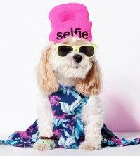 American Eagle Dog Clothes Line | POPSUGAR Fashion