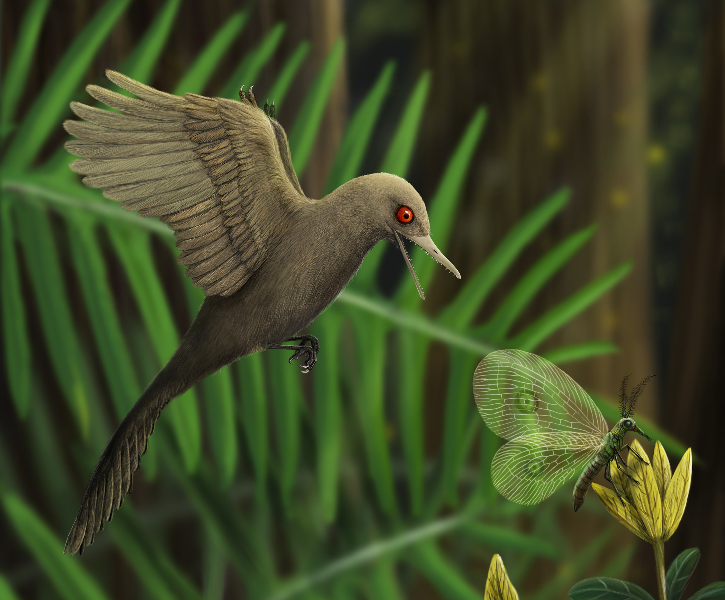 The Smallest Dinosaur Ever Found Was A Weird Primitive Bird Researchers Say