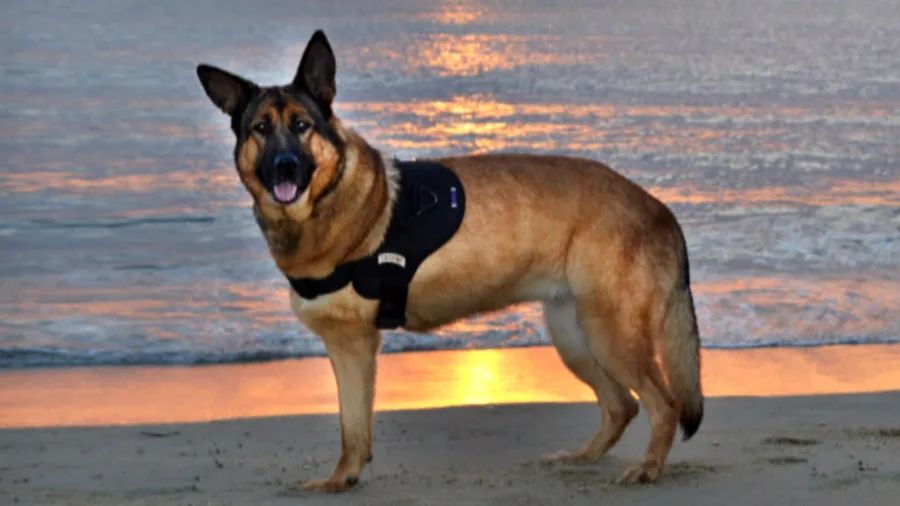 marine dog handlers
