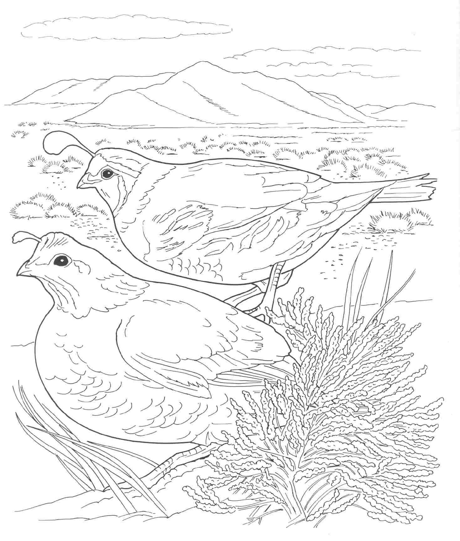 Coloring Pages Quail From Heaven - Coloring pages quail from heaven