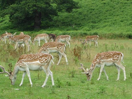 Bambi everywhere!