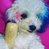 Cute Alert: Another Heart-Shaped Chihuahua! | POPSUGAR ...