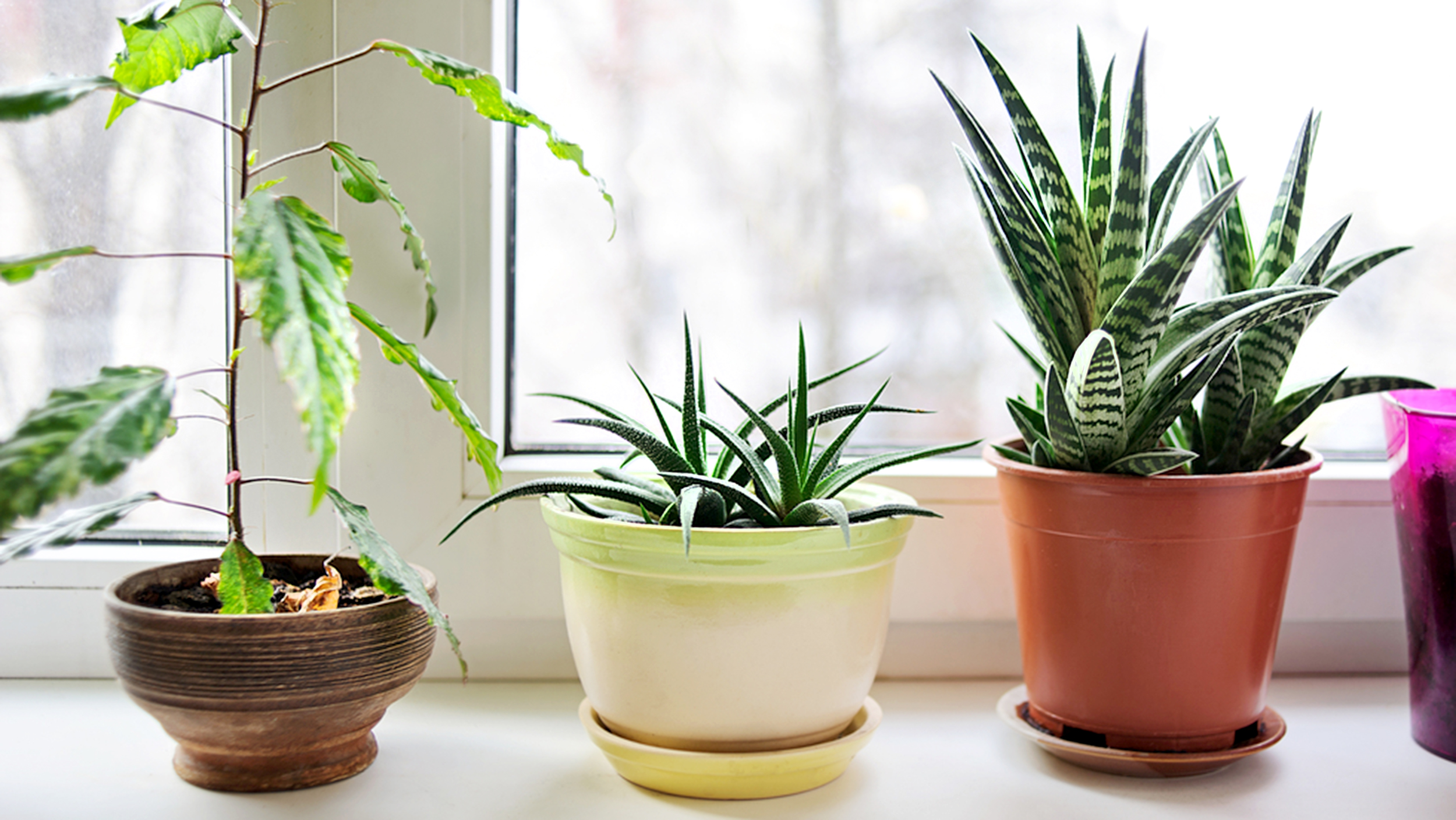Indoor Plants For Home 3 Indoor Plants That Actually Clean The Air Today