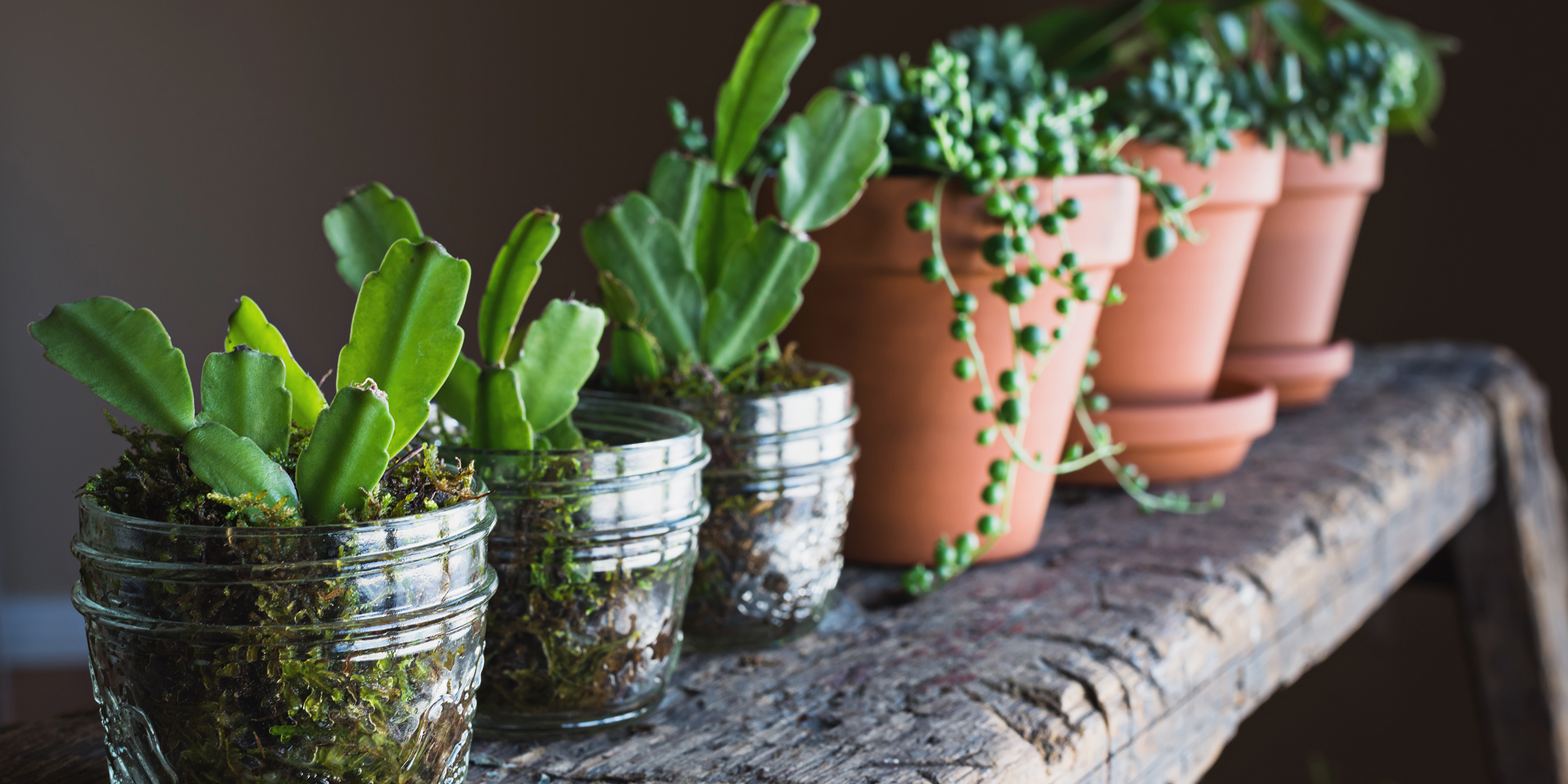 Where To Buy Indoor Plants Online Deal Alert Succulents And Other Indoor Plants Are 25 Percent Off