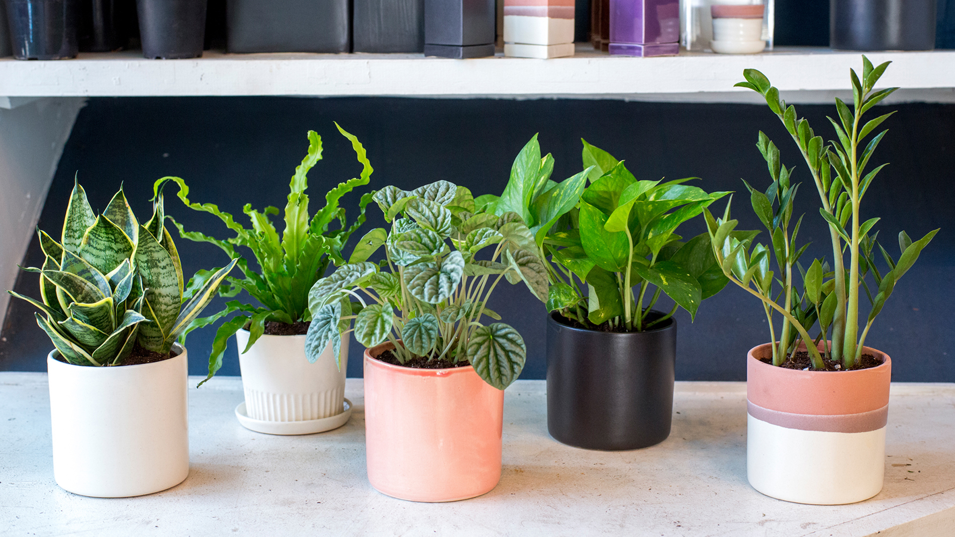 Indoor Plants For Low Light Indoor Houseplants You Can T Kill Unless You Try Really Really Hard
