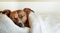 Want better sleep? Maybe bring your pet in the bed after ...
