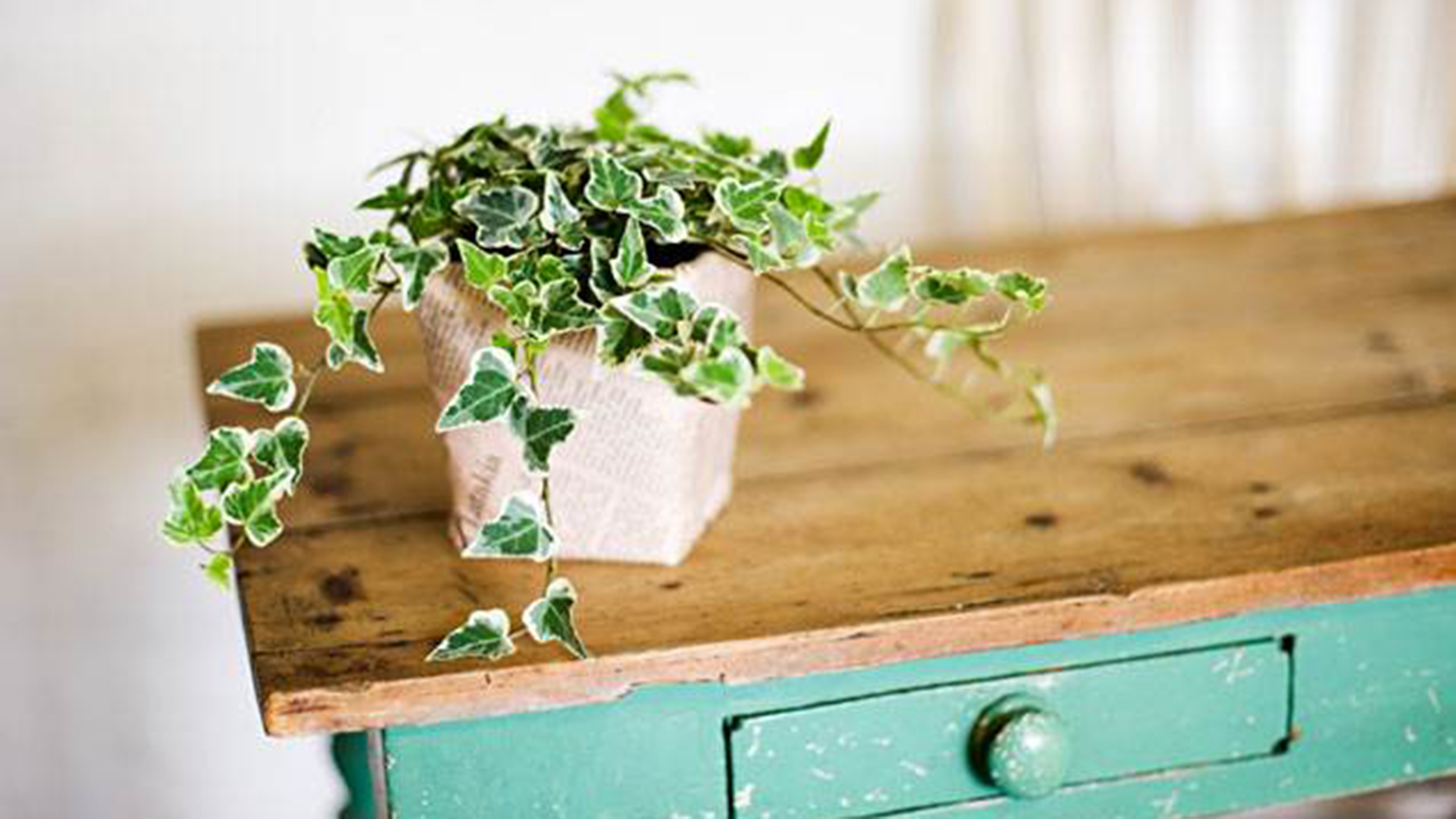 Plant In House The Easiest Indoor House Plants That Won 39t Die On You
