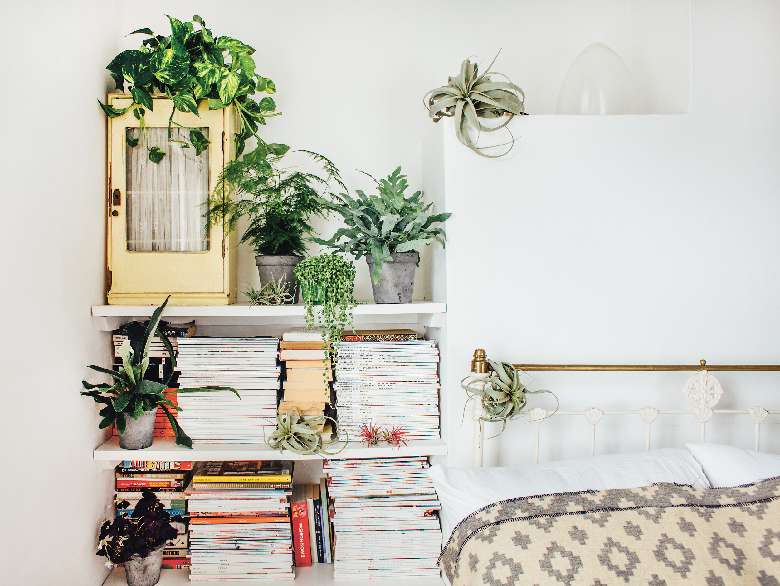 Cool Plants For Your Room Why Indoor Plants Make You Feel Better