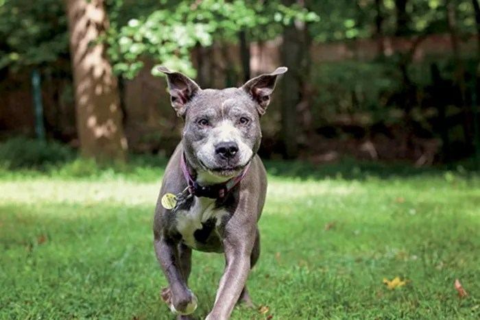 Remy the dog runs in her backyard in Nyack, New York.