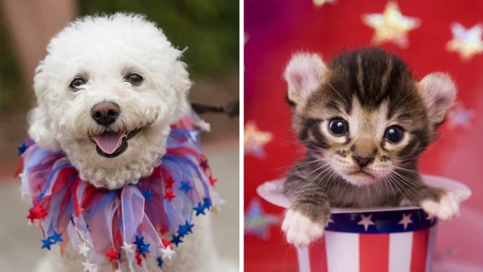 Photo Wallpaper Car Sound System July 4th Fireworks Tips To Protect Your Dog Or Cat From