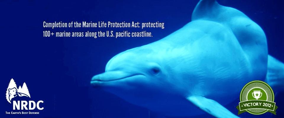 marine-life-project-960x400