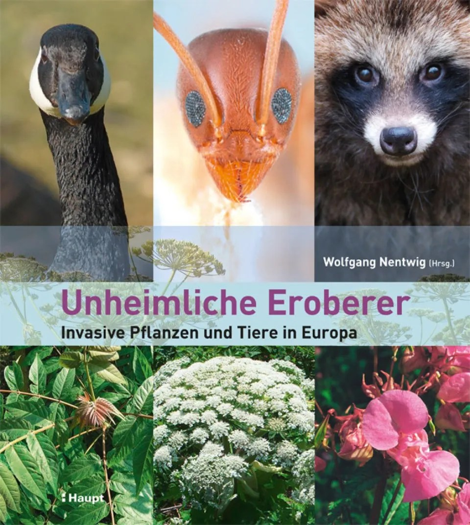 Carnivore Pflanzen Unheimliche Eroberer Invasive Pflanzen Und Tiere In Europa Alien Invaders Invasive Plants And Animals In Europe