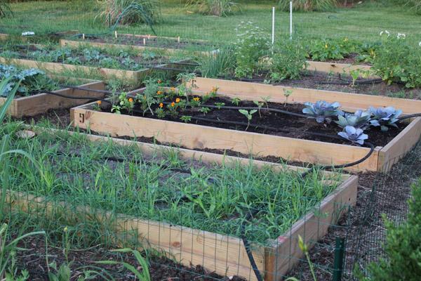 The Weekend Gardener Encouraging Community Garden