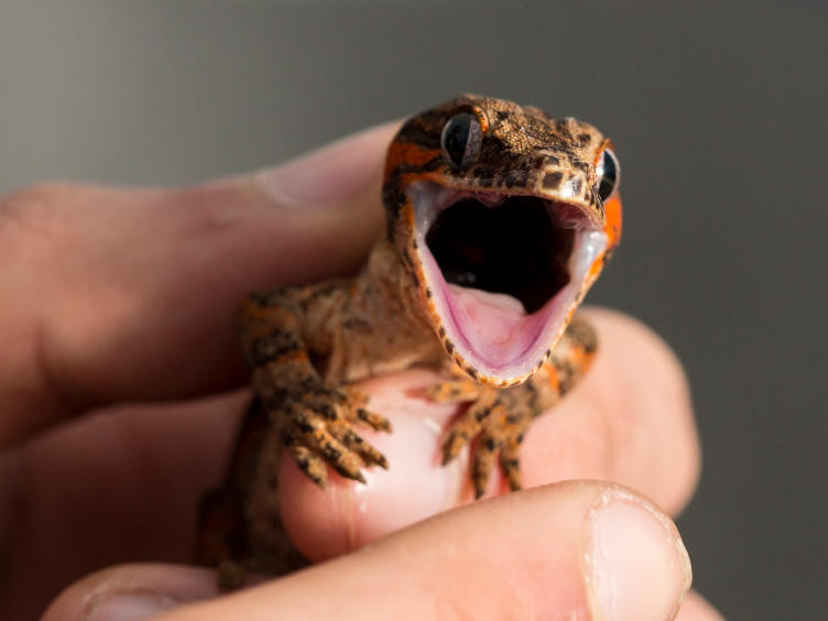 Cute Leopard Gecko Wallpaper Should We Really Be Keeping Cats And Dogs And Geckos