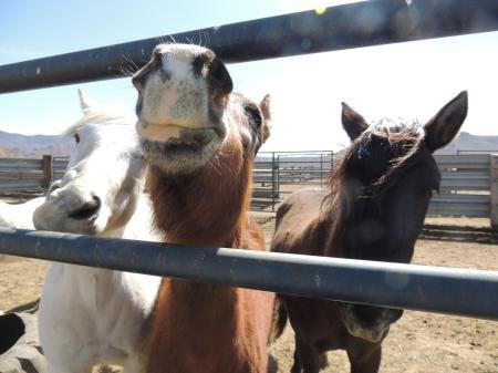 Utah Horses For Adoption