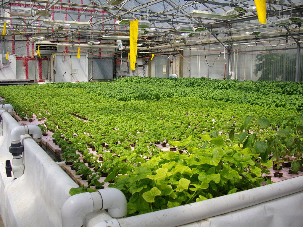 Installation Culture Indoor Some Farmers Upset Hydroponic Crops Carry Organic Label Wamc