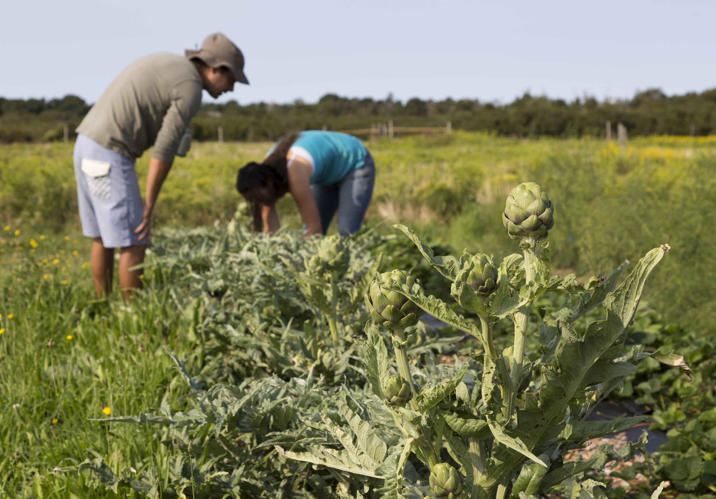 Sustainable Farmer Nantucket Community Farm Institute An Inspiring Model For Public