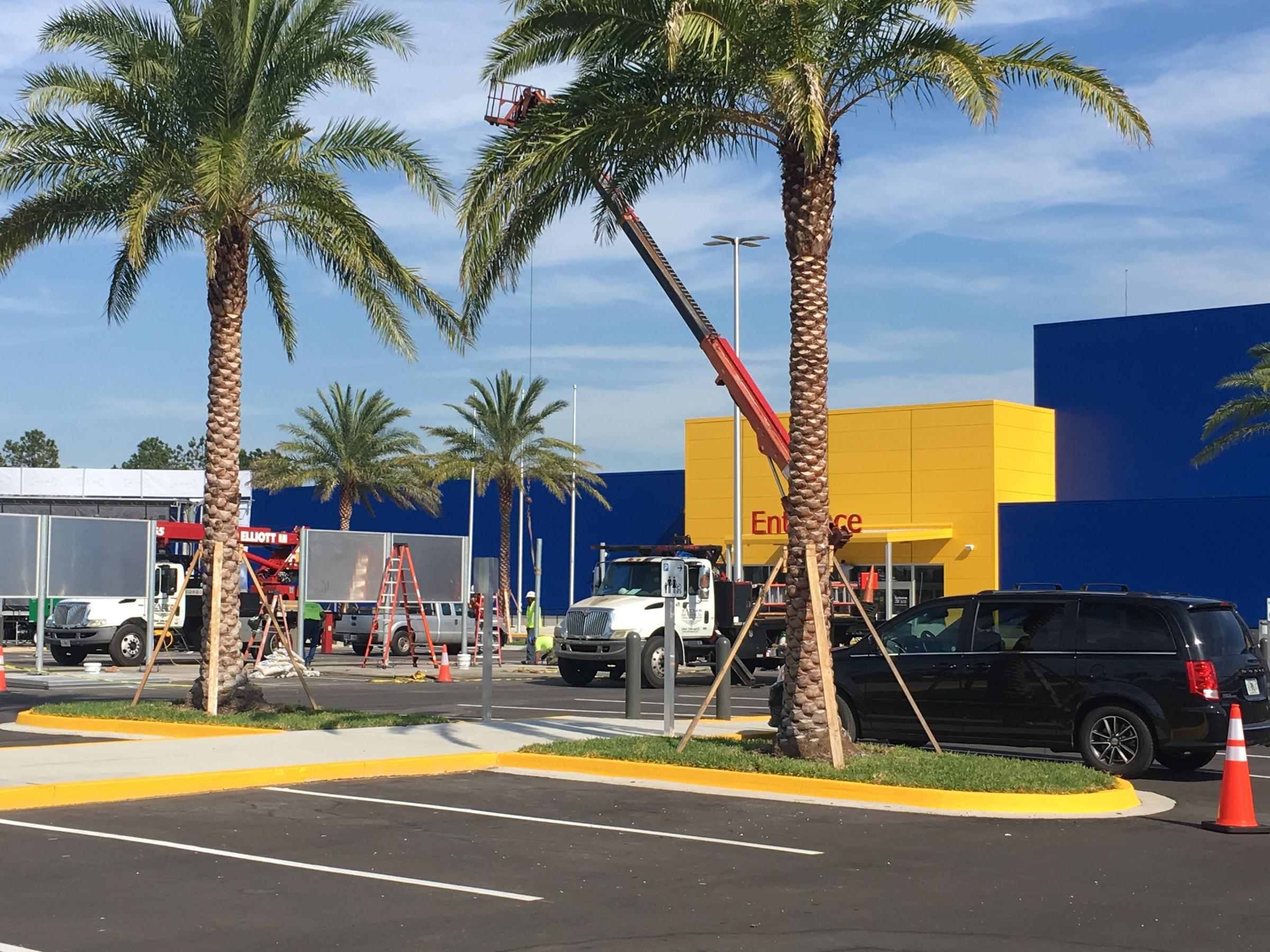 Ikea Palm Tree Dozens Camp Out For Ikea S Wednesday Grand Opening Wjct News