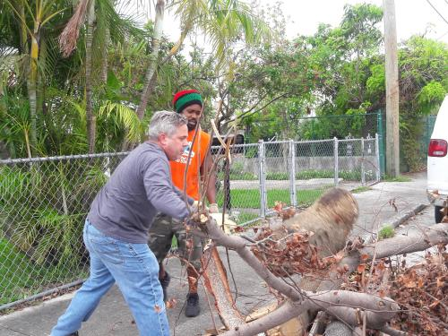 Medium Of Free Tree Removal