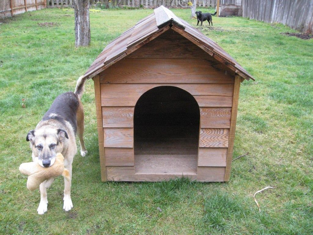 Dog House National Dog House Repairs Month Alabama Public Radio