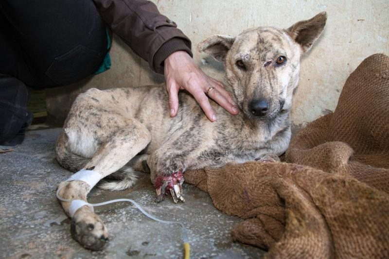 Large Of Treat A Dog