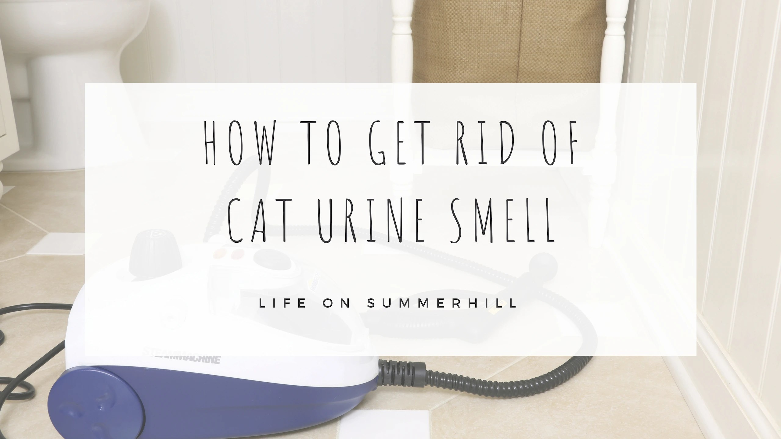 How To Get Urine Smell Out Of Clothes How To Get Rid Of Cat Urine Smell For Good