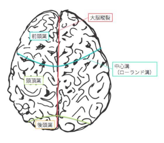 cerebrum-1