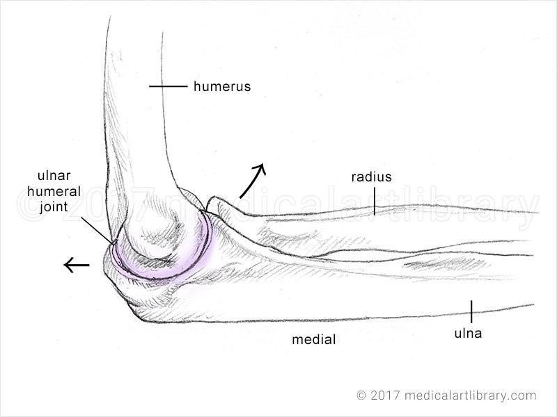 elbow diagram