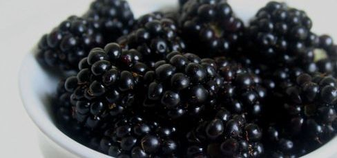 blackberries_488_355