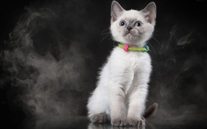 catd.jpg