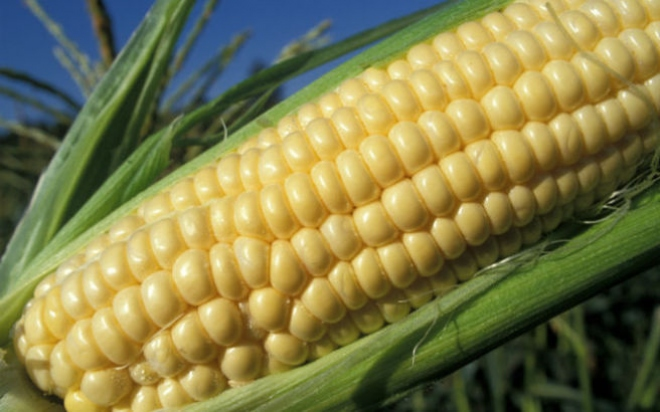 corn.medium.jpg