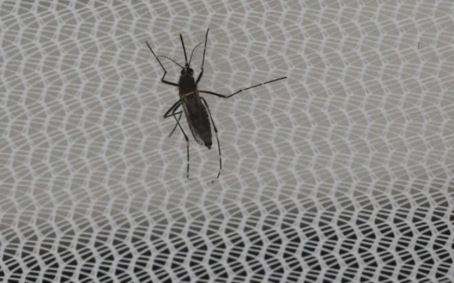 zika4-735x459.jpg
