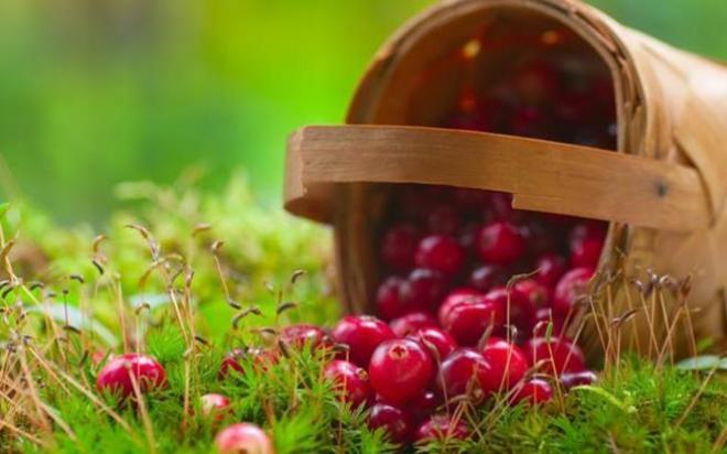 cberry.medium.jpg