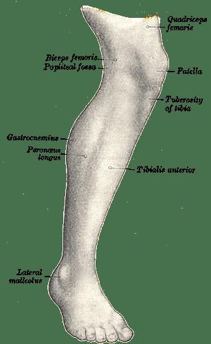 popliteal fossa
