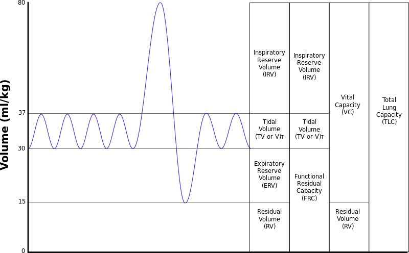Pulmonary Function Testing (PFT) made simple Iowa Head and Neck