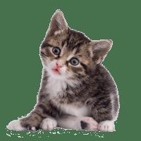 gato01_cvmedican