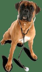 perro cv medican
